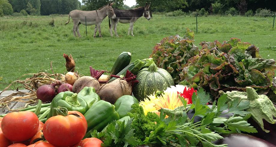 La Ferme des Isles, legumes 100% orgânicos